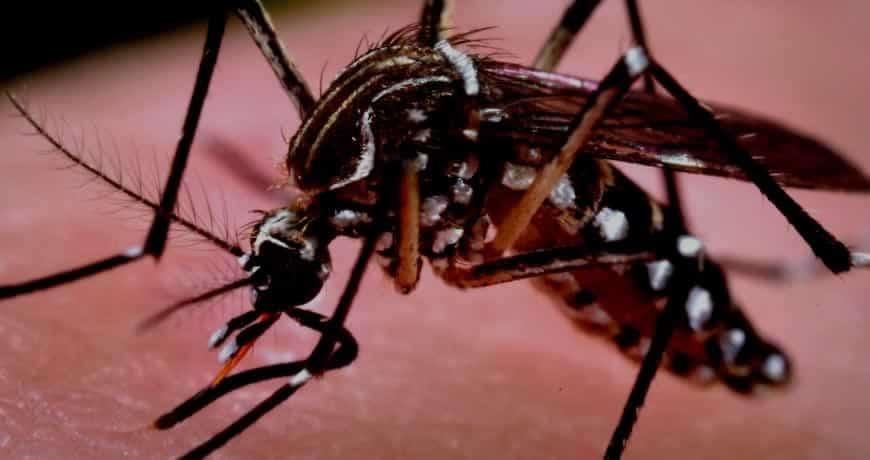 zika-virus-beneficio-governo